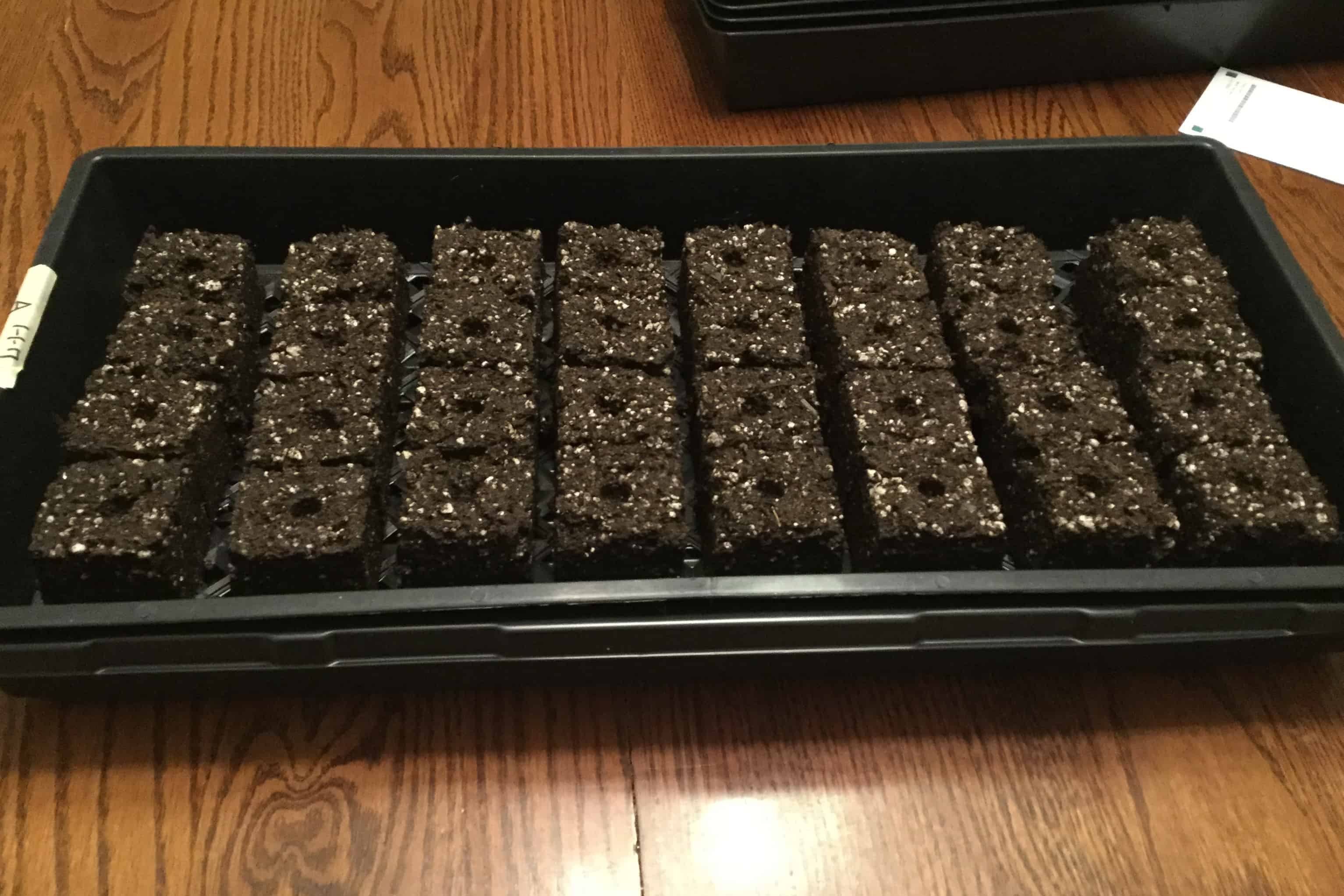 How to Start Seeds in Soil Blocks